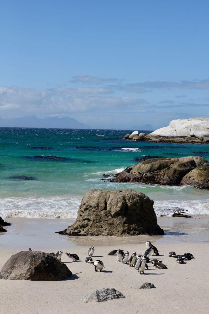 Pingviner på stranden