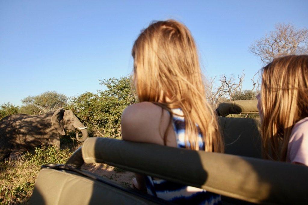 Vilja och elefanter